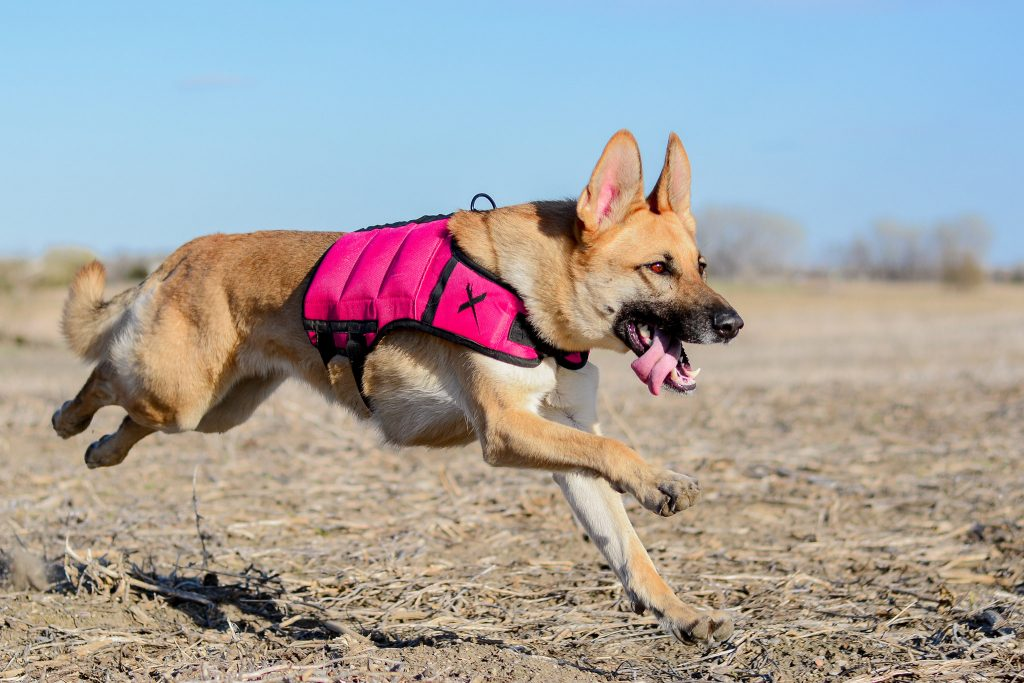 Pink Vest Pink Xdog Weight and Fitness Vest XDOG Discount Code Pink Vest Pink Vest by XDOG