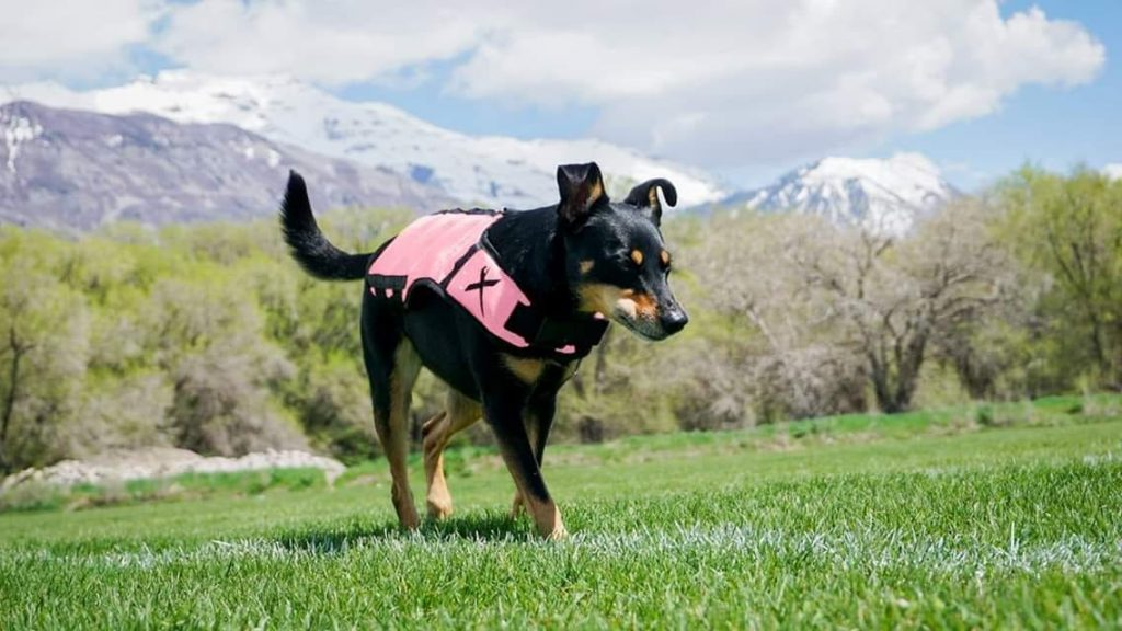 Pink Vest Pink Xdog Weight and Fitness Vest XDOG Discount Code Pink Vest