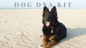 Embark Dog DNA Kit Review