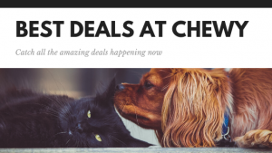 Black Friday Chewy Deals