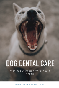 Dental Care for Dogs - Dog Dental Care - Brushing your Dogs Teeth