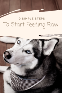 Start Feeding Raw, 10 Simple Steps to Begin Raw Feeding your Dog