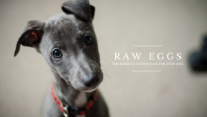 Benefits of Raw Eggs for your Dog