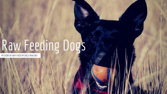 Raw Feeding Dogs