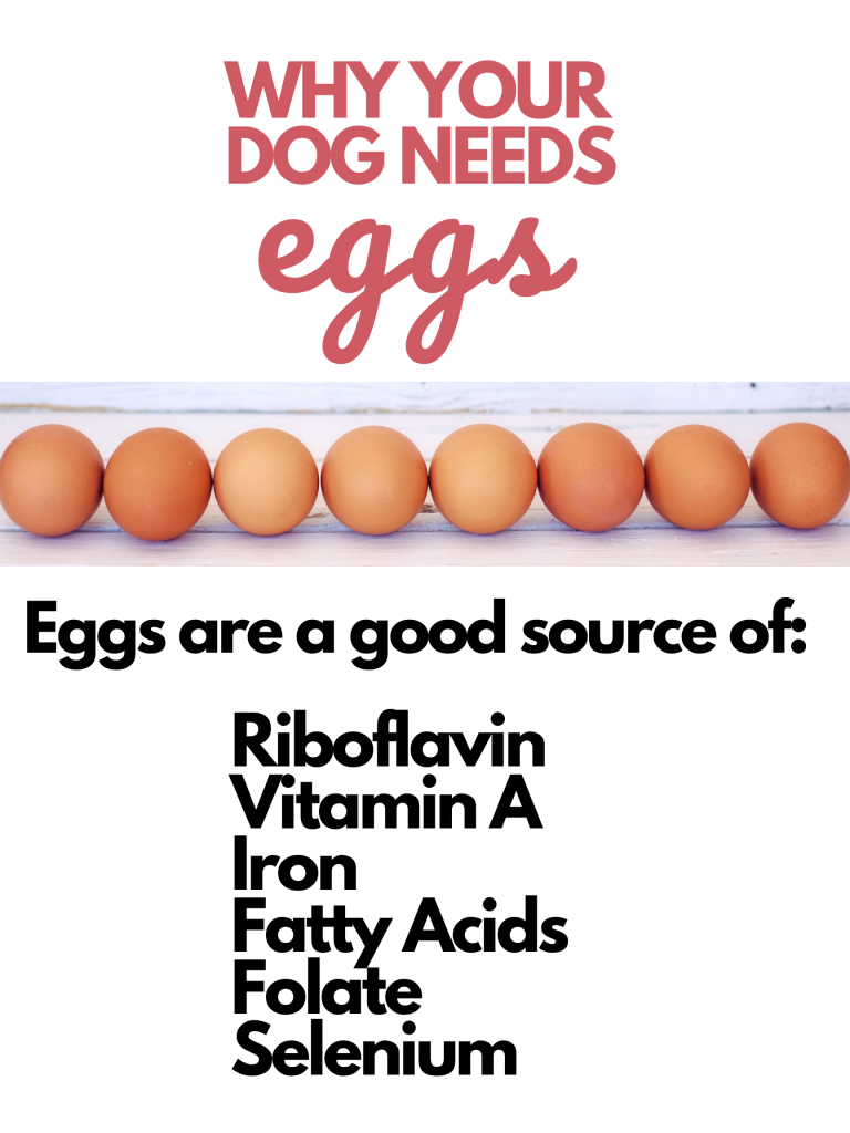 Why your dog needs eggs, raw egg importance