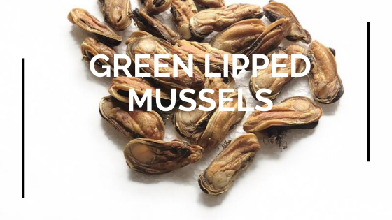 Green Lipped Mussel Benefits for Dogs