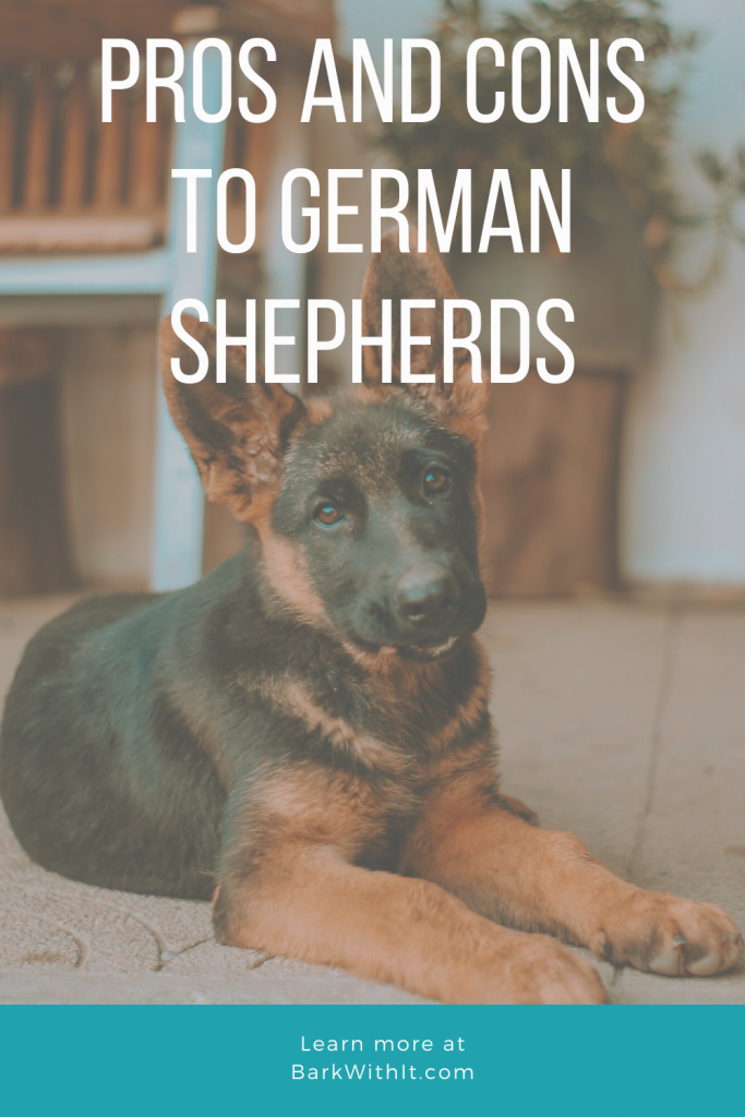 German Shepherd Dog Pros and Cons to Owning A German Shepherd