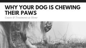 Home Remedies to get your dog to stop chewing their paws