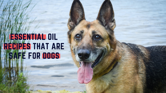 Essential Oil Recipes That are Safe for Dogs