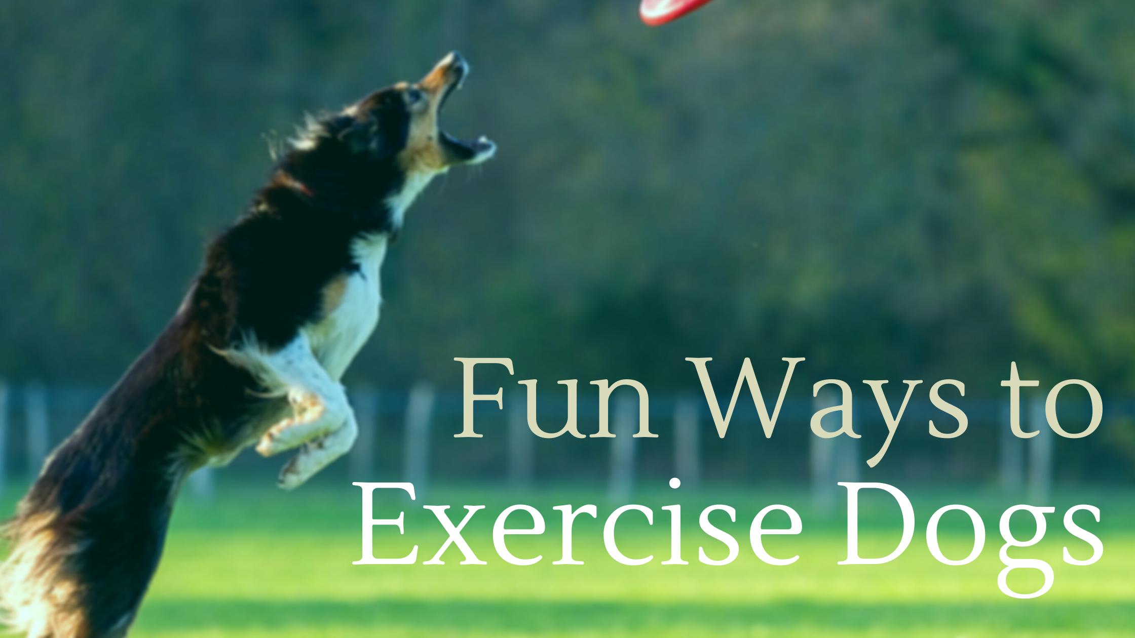 Exercise Dogs - Indoor Outdoor Adventurous Activities