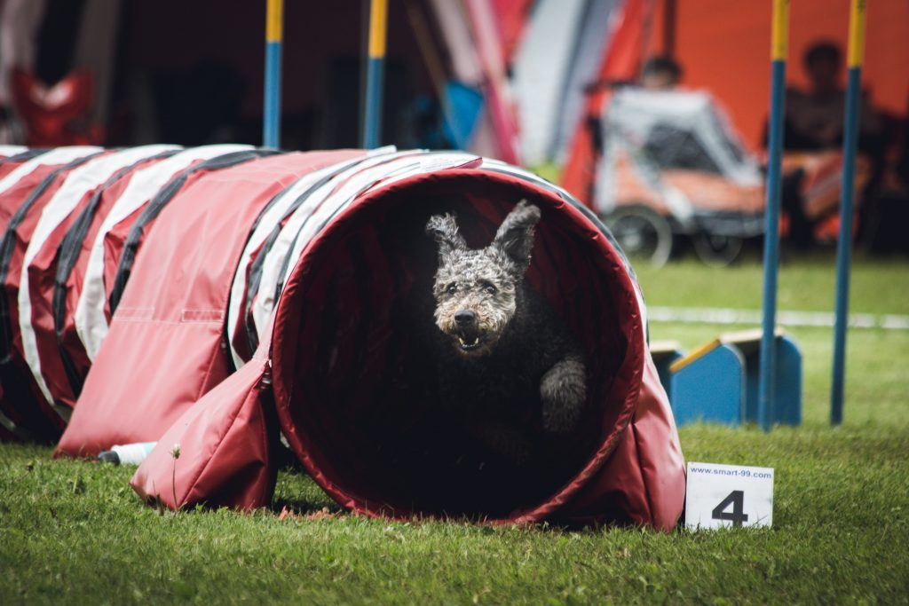 Exercise Dogs - Indoor Outdoor Adventurous Activities  Dog Agility