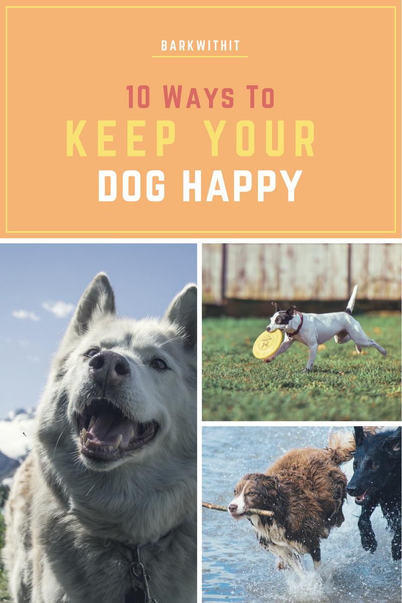 dog happy, keep your dog happy