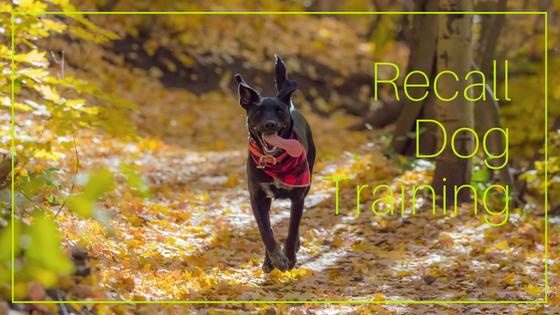 Recall Dog Training