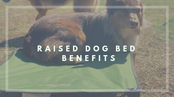 Benefits to using a Raised Dog Bed - Carlson Pet Products