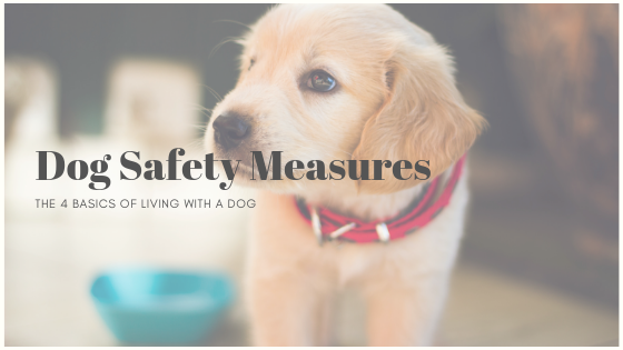 The Four Basic Dog Safety Measures
