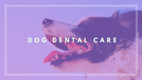 Dental Care for Dogs - Dog Dental Care Routine - Brushing your dogs teeth