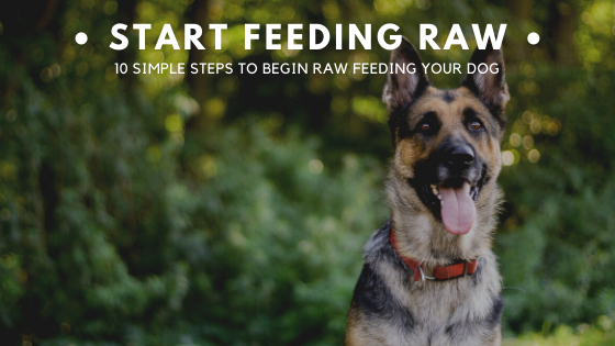 Start feeding raw