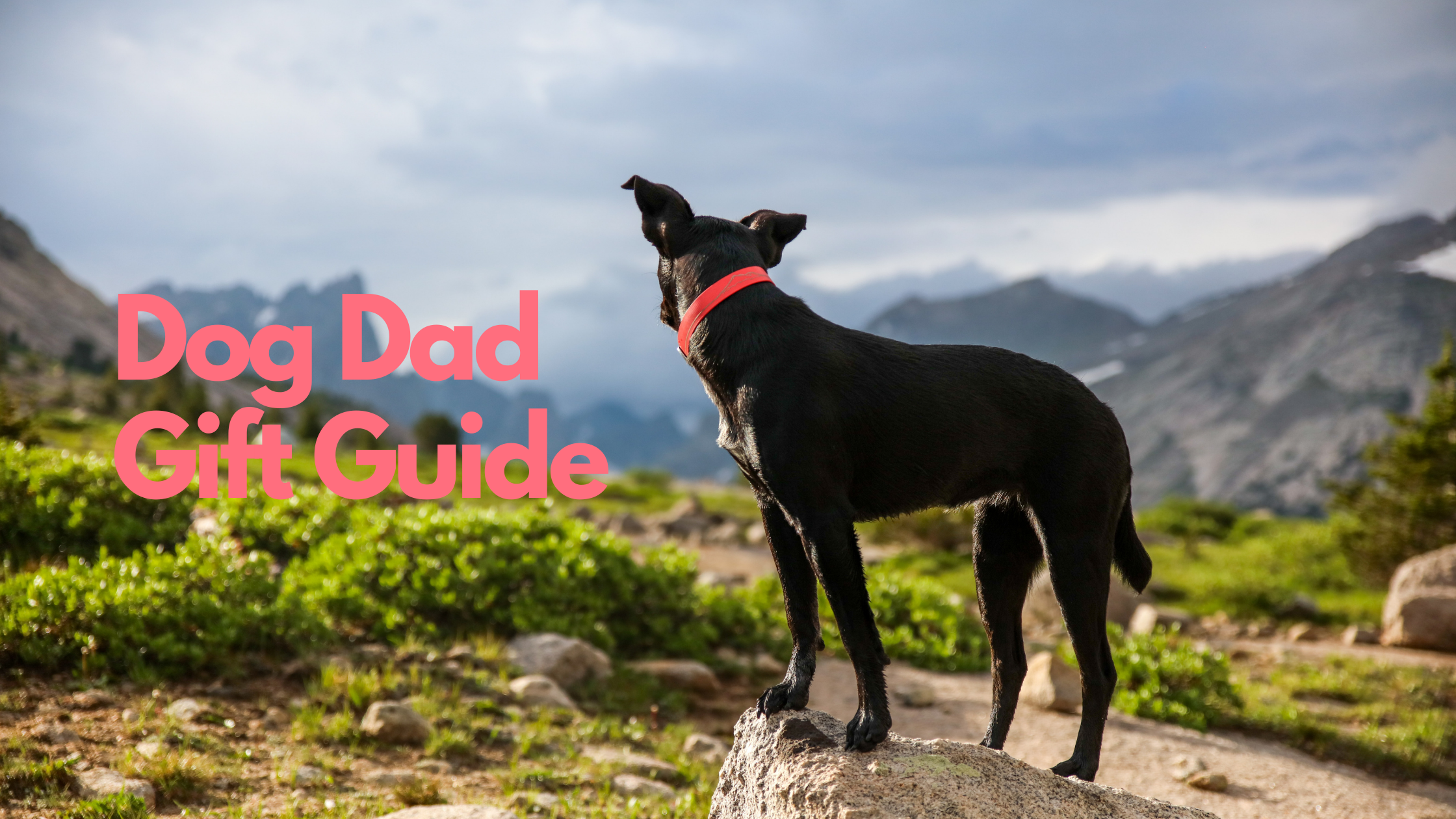 Dog Dad Gift Guide